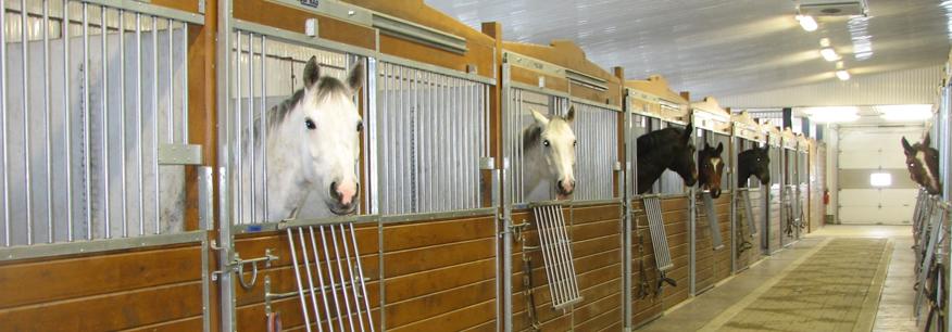 Curies la mont e pension pour chevaux ferme classique for Manege interieur montreal